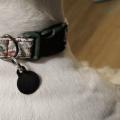 Handmade DIY dog collar reindeer 1