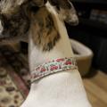 Handmade DIY dog collar Christmas cars 3