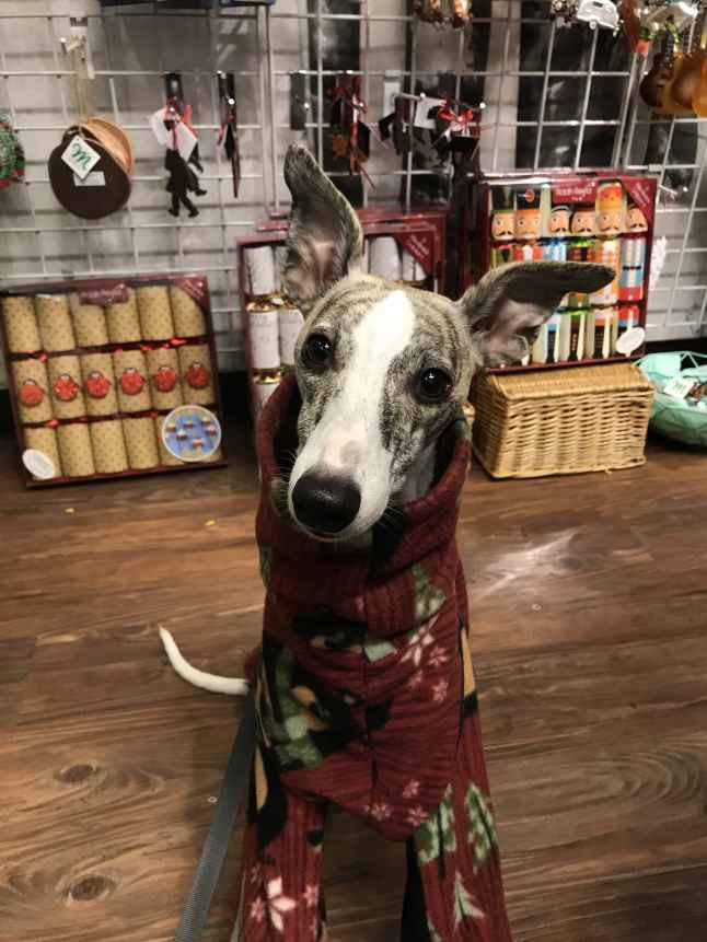 Whippet in Portland gift shop Presents of Mind 2