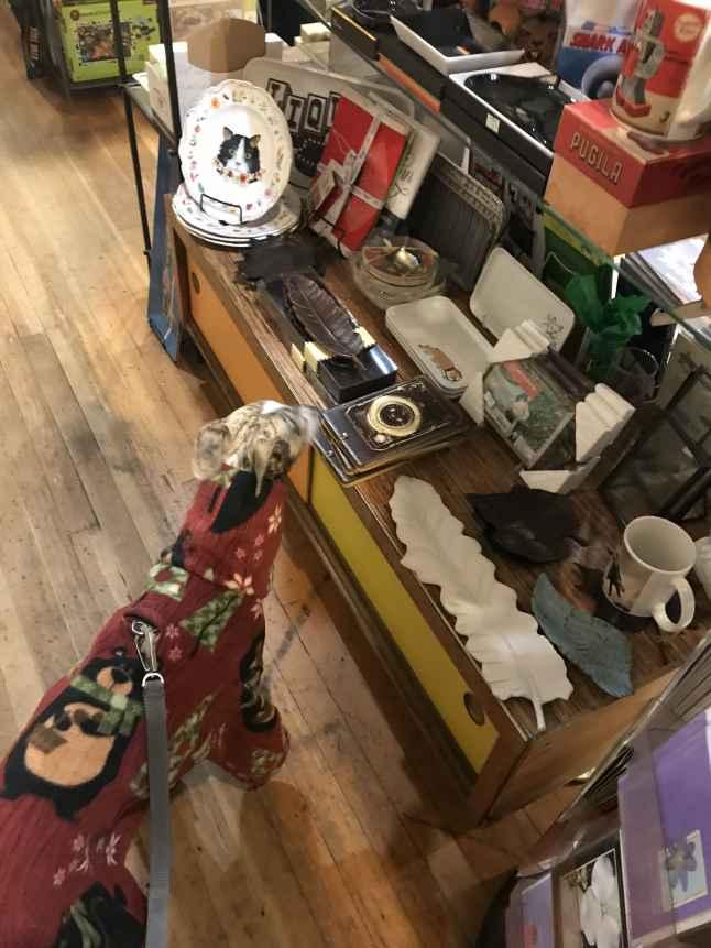 Whippet in Portland gift shop Memento