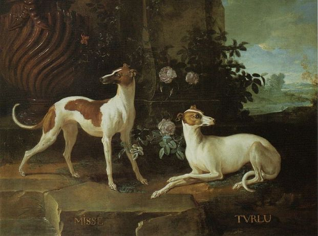 800px-Misse_and_Turlu,_Two_Greyhounds_Belonging_to_Louis_XV.jpg
