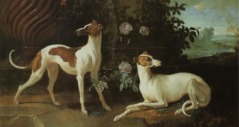 Misse and Turlu, Two Greyhounds Belonging to Louis XV