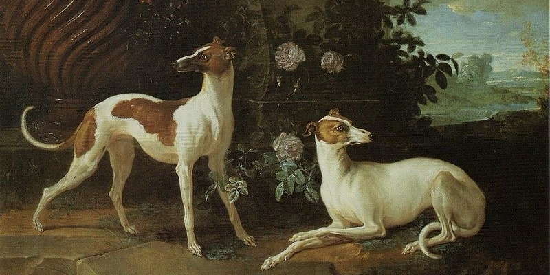 Misse and Turlu, Two Greyhounds Belonging to Louis XV