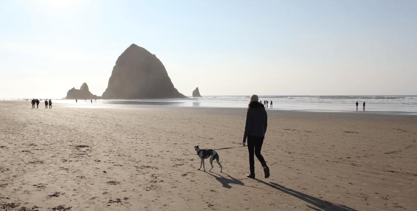 Dog friendly Cannon Beach Haystack Rock