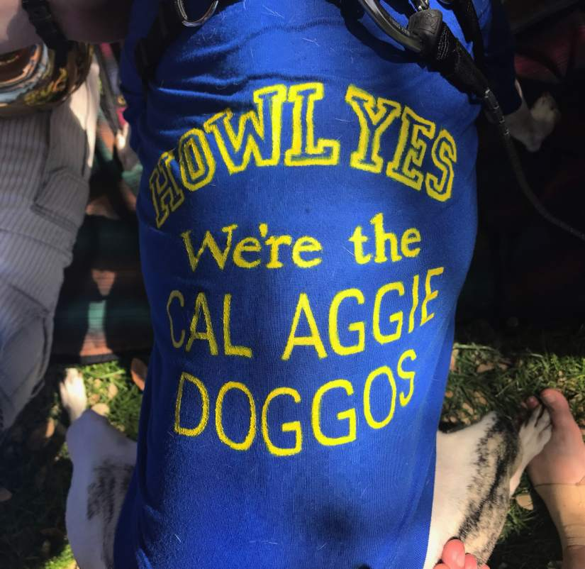 cal aggie marching doggos shirt 1-min