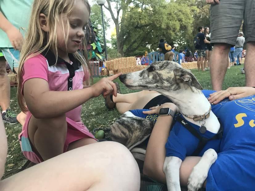 picnic day dog kid 2-min