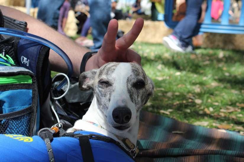 picnic day dog nap 11-min