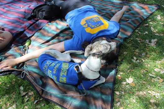 picnic day dog nap 4-min