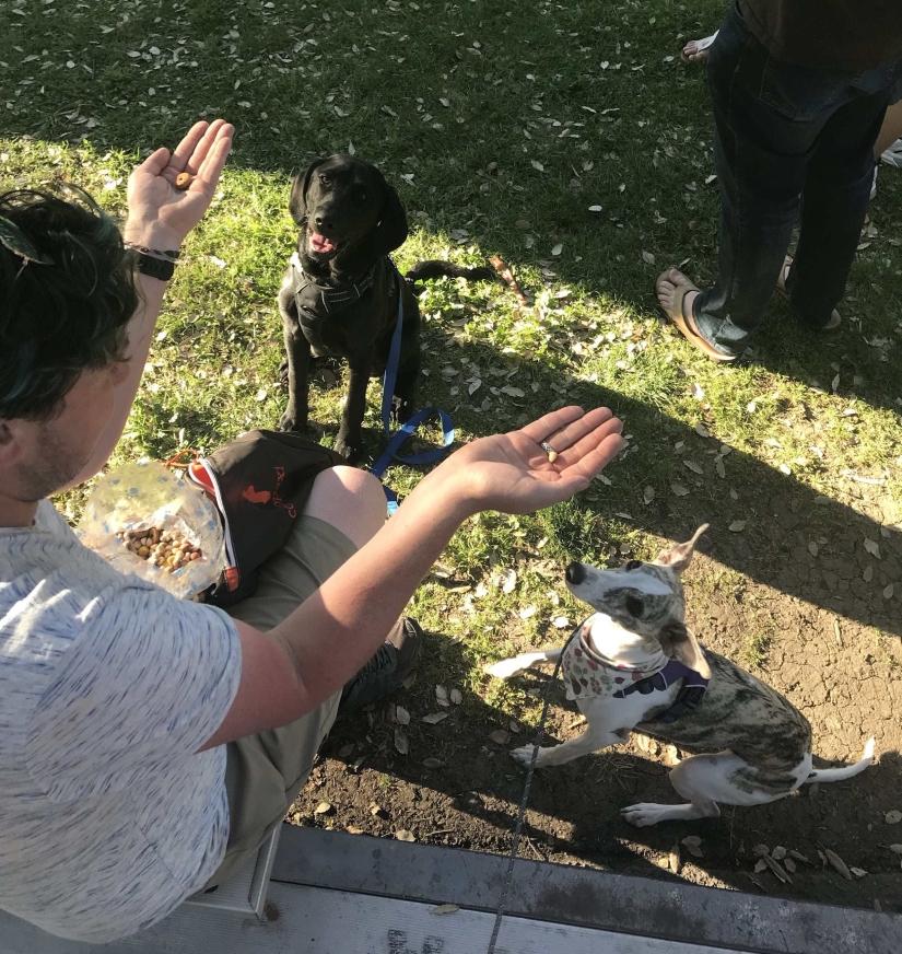 picnic day dog treats-min