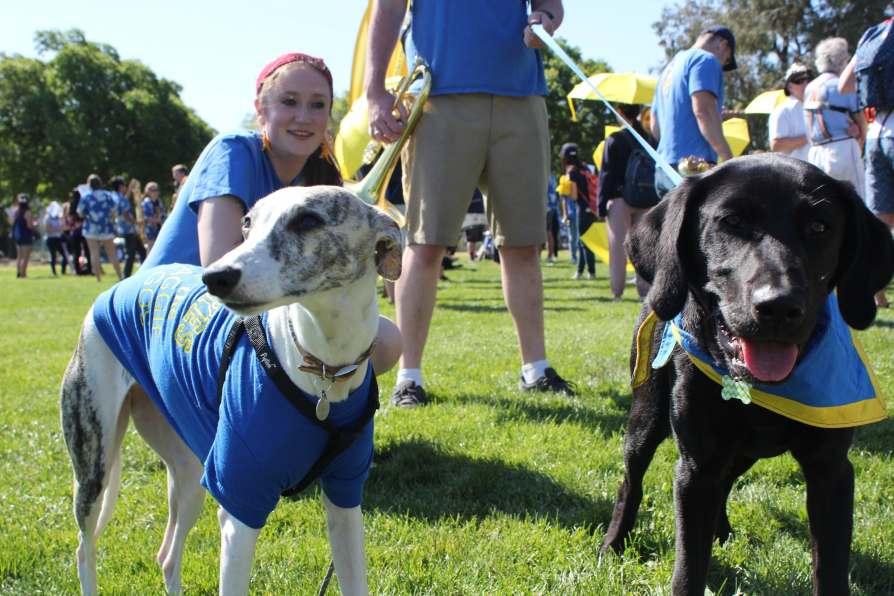 picnic day parade dogs-min