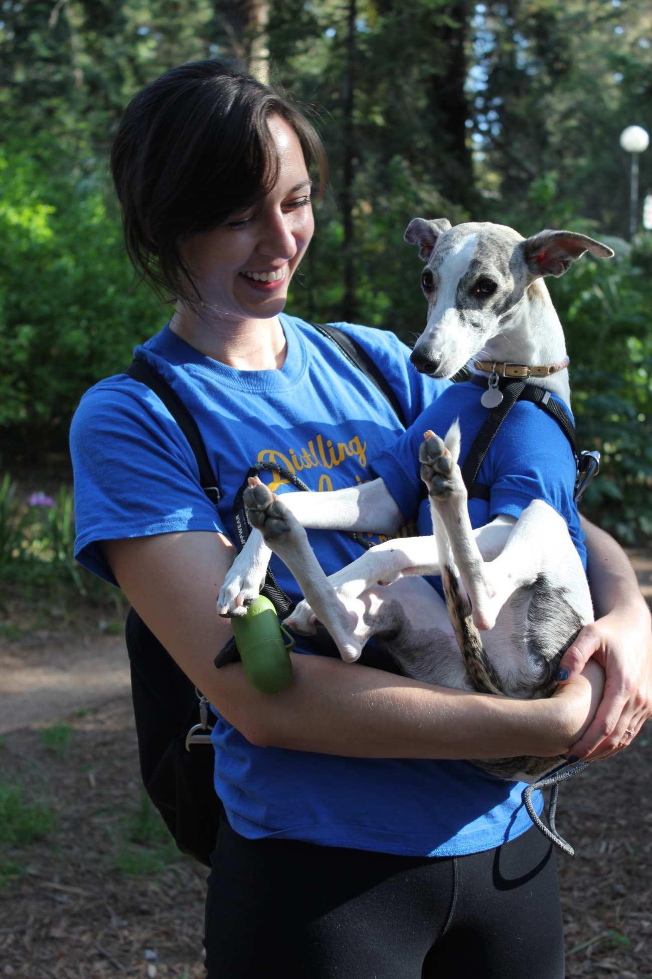 picnic day whippet dog 1-min