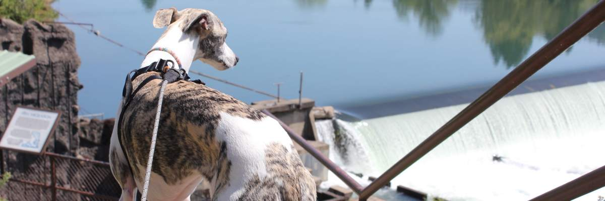 I-5 Road Trip: 6 Dog-Friendly Stops Between Portland and Sac – The