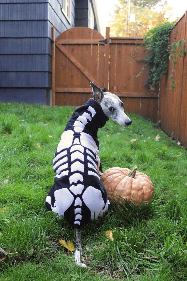 Whippet Dog Skeleton Halloween Costume